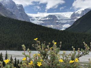 wildflowers with mountains and lake in the background